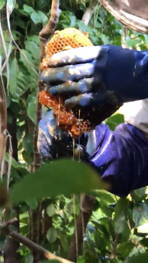 Bee honeycomb removal